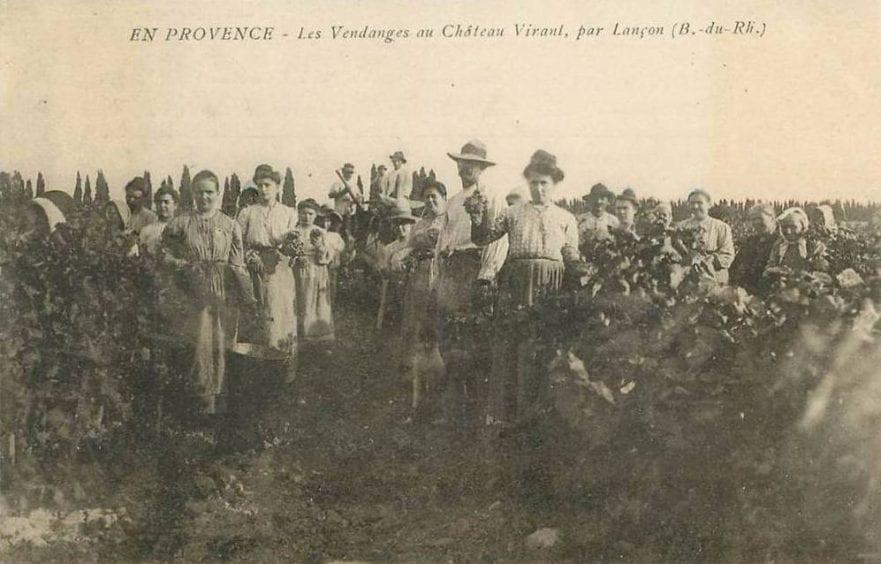 Equipe de vendangeurs Provence